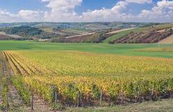 Landskap i Burgundy, Burgund Royaltyfria Bilder