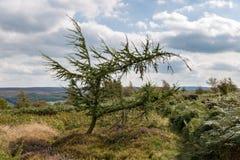 Landskap i de norr York hederna Arkivfoton