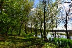 Landskap i deltan nära skogen Fotografering för Bildbyråer