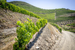 Landskap i den Douro dalen Arkivfoton