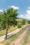 Landskap i den franska Dromen med trädet Royaltyfria Bilder