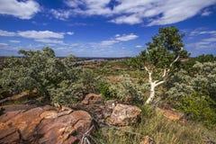 Landskap i den Mapungubwe nationalparken, Sydafrika Arkivfoton
