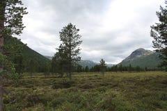 Landskap i ett av den Norge nationalparken Arkivbilder