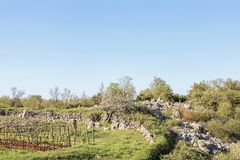 Landskap i Istria i Kroatien Arkivfoton