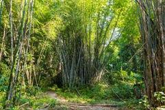 Landskap i Khao Sok National Park i Thailand Khao Sok National Park regndjungelskogen i det Surat Thani landskapet Royaltyfria Foton
