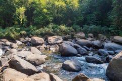 Landskap i Khao Sok National Park i Thailand Khao Sok National Park regndjungelskogen i det Surat Thani landskapet Royaltyfri Bild