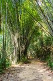 Landskap i Khao Sok National Park i Thailand Khao Sok National Park regndjungelskogen i det Surat Thani landskapet Fotografering för Bildbyråer