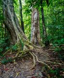 Landskap i Khao Sok National Park i Thailand Khao Sok National Park regndjungelskogen i det Surat Thani landskapet Royaltyfria Bilder