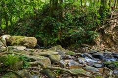 Landskap i Khao Sok National Park i Thailand Khao Sok National Park regndjungelskogen i det Surat Thani landskapet Arkivfoton