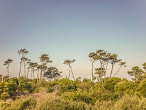 Landskap i kusten av Uruguay royaltyfria foton