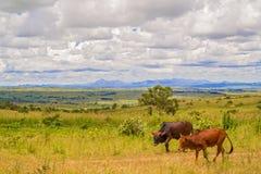 Landskap i Malawi royaltyfria bilder