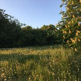 Landskap i milton keynes royaltyfri fotografi