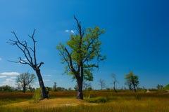 Landskap i Moremi GR - den Okavango deltan - Botswana Royaltyfri Foto