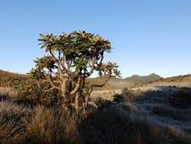 Landskap i nationalparken Horton Plains arkivfoto