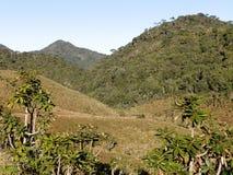Landskap i nationalparken Horton Plains, Sri Lanka royaltyfri fotografi