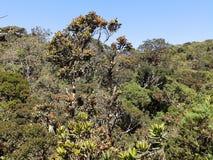 Landskap i nationalparken Horton Plains, Sri Lanka arkivfoto
