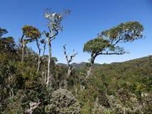 Landskap i nationalparken Horton Plains, Sri Lanka royaltyfri bild