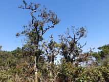 Landskap i nationalparken Horton Plains, Sri Lanka royaltyfria foton