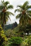 Landskap i Nuku Hiva Arkivfoto