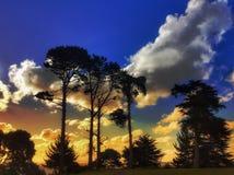 Landskap i Nya Zeeland Arkivfoto