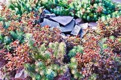 Landskap i parken Fotografering för Bildbyråer