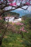Landskap i persikafruktträdgård arkivbild