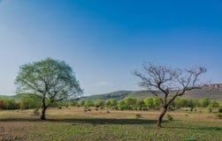 Landskap i ranthambore Arkivbild