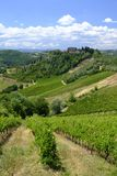 Landskap i Romagna på sommar: vingårdar arkivfoto