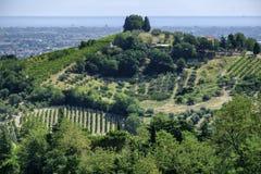 Landskap i Romagna på sommar: vingårdar royaltyfri fotografi