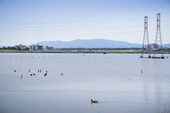 Landskap i södra San Francisco Bay, sikt in mot det Moffett flygfältet från fjärdslingan, Mt Umunhum i bakgrunden; Sunnyvale royaltyfria bilder