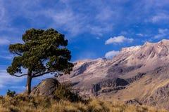 Landskap i skönhetvulkorna av Mexico Royaltyfri Foto