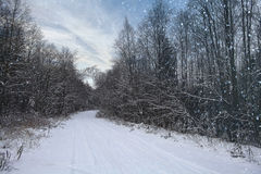 Landskap i snöig skog Royaltyfri Foto