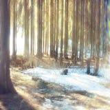 Landskap i solig snöig skog Royaltyfri Fotografi