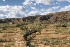 Landskap i Spanien på sommar Arkivbild