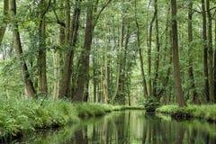 Landskap i Spreewalden i Brandenburg i Tyskland Fotografering för Bildbyråer