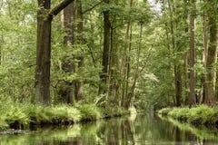 Landskap i Spreewalden i Brandenburg i Tyskland Royaltyfria Bilder