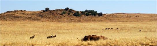 Landskap i Sydafrika fotografering för bildbyråer