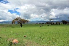 Landskap i Tanzania Royaltyfri Bild
