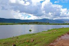 Landskap i Tanzania Royaltyfria Bilder