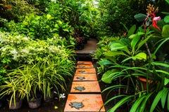 Landskap i trädgården. royaltyfri fotografi