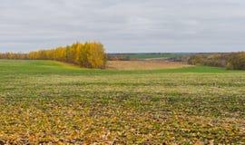 Landskap i ukrainska fält Arkivfoto
