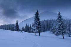 Landskap i vinterberg Sikt av snö-täckte högväxta granar och oframkomliga snödrivor fotografering för bildbyråer