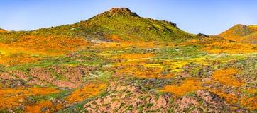 Landskap i Walker Canyon under superbloomen, Kalifornien vallmo som täcker bergdalarna och kanterna, sjö Elsinore, fotografering för bildbyråer