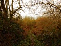 Landskap i Zottegem arkivbilder