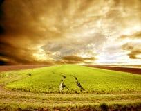 landskap jordbruk Royaltyfri Bild