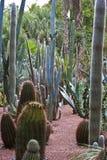 landskap kaktusträdgård royaltyfri fotografi