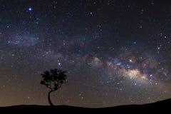 Landskap konturn av trädet med galaxen för den mjölkaktiga vägen och göra mellanslag dusen royaltyfria foton