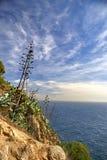 Landskap med agaveblomman Arkivfoto