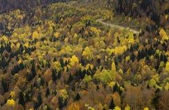 Landskap med all variation av skuggor av höstlövverk Härligt djurliv Sikt uppifrån av berget på arkivbilder