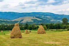 Landskap med baler av sugrör Arkivfoto